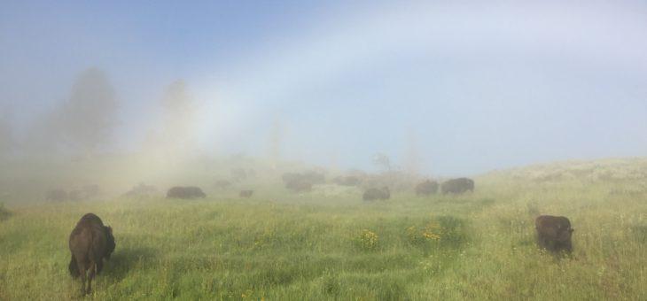 Day 18 Wyoming 6/8 Yellowstone